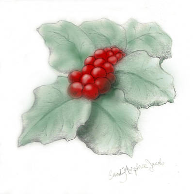 Drawing - Portland Holly by Sandy Murphree Jacobs