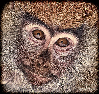 Photograph - Portrait Of A Baby Patas Monkey by Jim Fitzpatrick