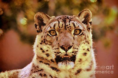 Photograph - Portrait Of A Snow Leopard II by Jim Fitzpatrick