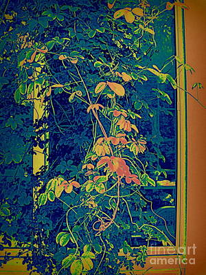Digital Art - Portrait Of A Vine by Nancy Kane Chapman