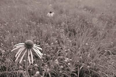 Photograph - Prairie Snapshot  by Tim Good
