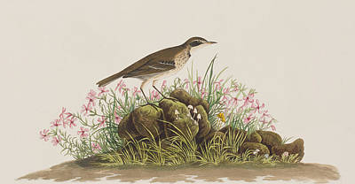 Prairie Titlark Art Print by John James Audubon