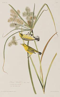 Warbler Wall Art - Painting - Prairie Warbler by John James Audubon
