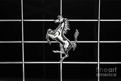 Photograph - Prancing Horse by Dennis Hedberg