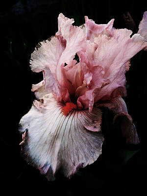Photograph - Pretty In Pink by Jacqueline  DiAnne Wasson