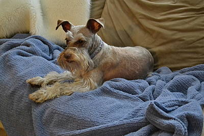 Photograph - Pretty Puppy by Carol  Bradley