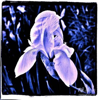 Shower Digital Art - Pretty Purple On Blue by Marsha Heiken