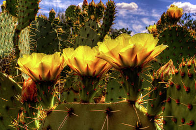 Photograph - Prickly Pear Cactus Flowers by Roger Passman
