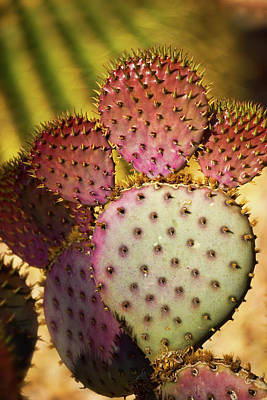 Photograph - Prickly Pear Cactus  by Saija Lehtonen