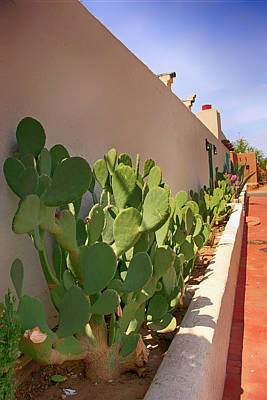 Photograph - Prickly Pear by Chris Smith