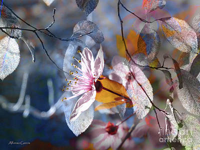 Photograph - Primavera by Alfonso Garcia