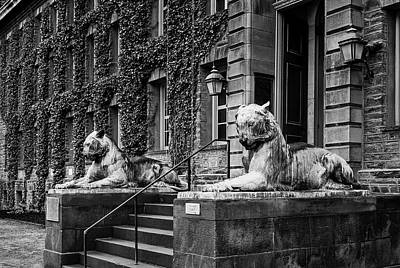 Photograph - Princeton University Nassau Hall Tigers by Susan Candelario