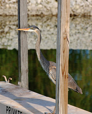Photograph - Private Dock by Kathleen Stephens