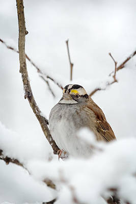 Snow Photograph - Proud Yellow by Benjamin DeHaven