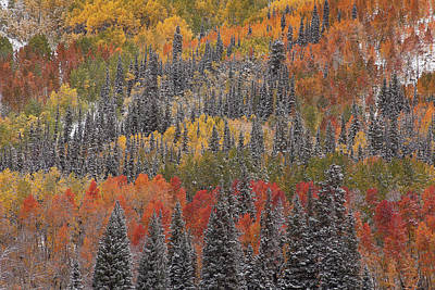 Photograph - Psychedelic Autumn by Scott Wheeler