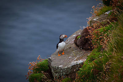 Photograph - Puffin by Avril Christophe