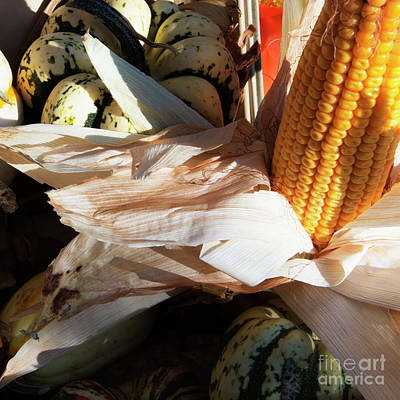Photograph - Pumpkin And Corn by Jesse Watrous