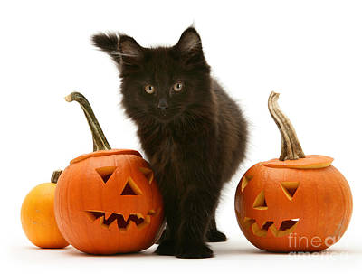 Photograph - Pumpkin Puss by Warren Photographic