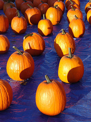Photograph - Pumpkins Blues Portrait by Steve Karol
