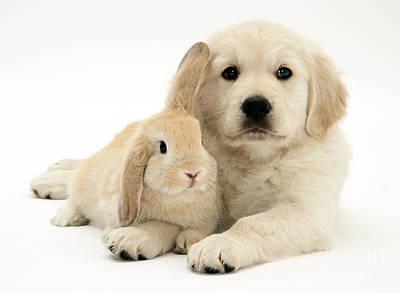 Puppy And Bunny Art Print by Jane Burton