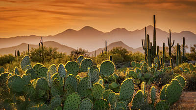 Photograph - Pure Sonoran Gold  by Saija Lehtonen