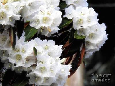 Photograph - Purity by Peggy Hughes