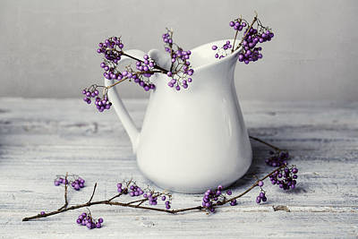 Still Life Royalty-Free and Rights-Managed Images - Purple Berries by Nailia Schwarz