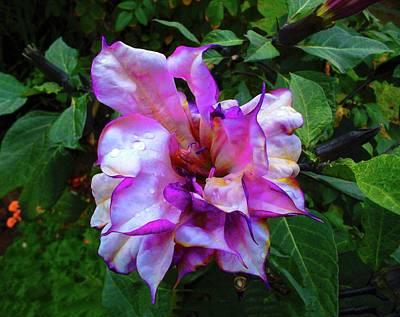 Photograph - Purple Flower by Mark Blauhoefer