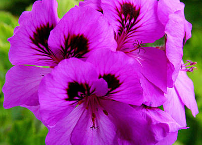 Photograph - Purple Flowers  by Anthony Jones