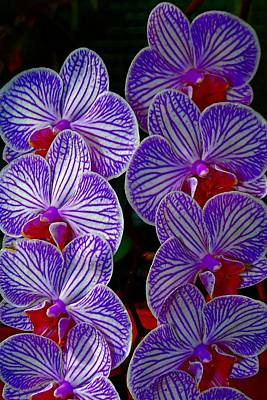Photograph - Purple Flowers by Bill Howard