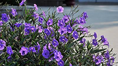 Miss. Saigon Photograph - Purple Flowers. by Nhi Ho Thi Xuan