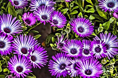 Photograph - Purple Flowers by Rick Bragan