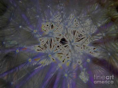 Photograph - Purple Dandelion Haze by D Hackett