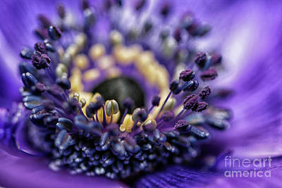 Photograph - Purple Heart Of A Flower by Patricia Hofmeester