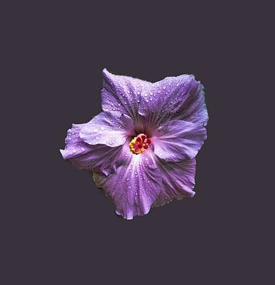 Photograph - Purple Hibiscus by Pamela Walton
