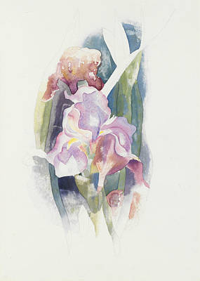 Iris Drawing - Purple Iris by Charles Demuth