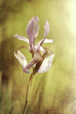 Photograph - Purple Iris by Jackie Farnsworth