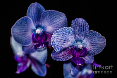 Photograph - Purple Orchid by Gerald Kloss
