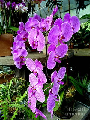 Photograph - Purple Orchids by Ed Weidman