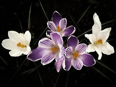 Photograph - Purple Passion by Regina Arnold