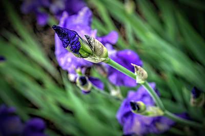 Digital Art - Purple by Patrick Groleau