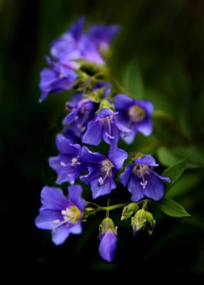 Violet Photograph - Purple Rain by Jessica Jenney