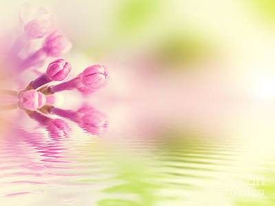Wellness Photograph - Purple Spring Lilac Flowers In Water Reflection by Michal Bednarek