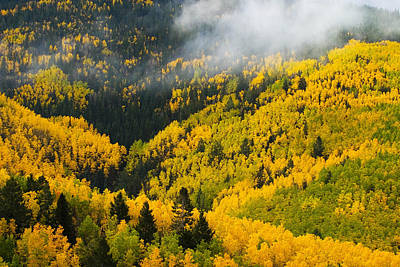Quaking Aspen And Ponderosa Pine Trees Art Print by Ralph Lee Hopkins