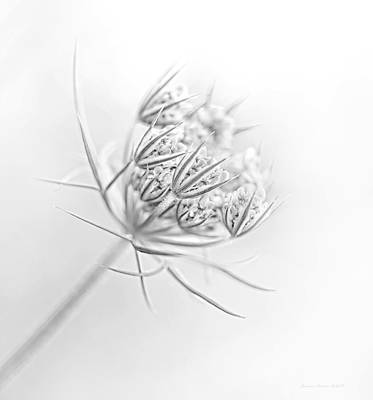 Photograph - Queen Anne's Lace Flower Buds Monochrome by Jennie Marie Schell