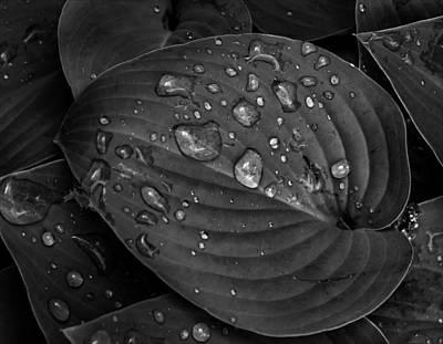 Wet On Wet Photograph - Rain Drops On Hosta by Robert Ullmann