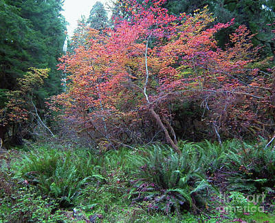 Photograph - Rain Forest Fall by Rex E Ater