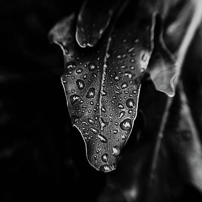 Rain On The Philodendron Art Print