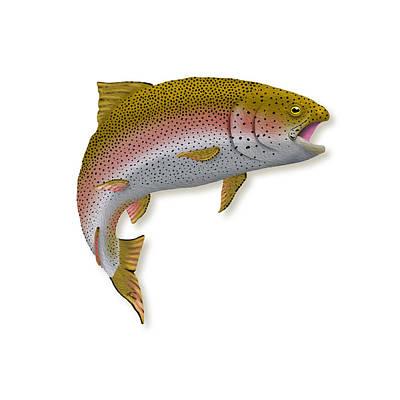 Digital Art - Rainbow Trout 1 by Agustin Goba