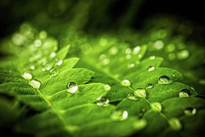 Photograph - Raindrops by Lilia D